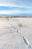 Dierlijke Sporen in Verse Sneeuw Stock Afbeelding