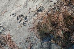 Dierlijke stappen op zand royalty-vrije stock foto's