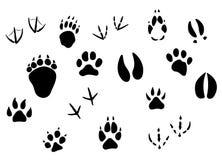 Dierlijke voetafdrukken en sporen Stock Afbeeldingen