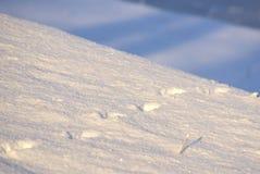 Dierlijke Voetafdrukken in Sneeuw Stock Afbeelding