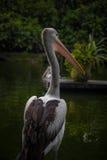 dierlijke vogel Royalty-vrije Stock Foto