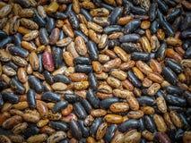 Diese Bohnen Phaseolus- vulgarisanlage im Nord-Iran, Gilan-provinc stockfoto