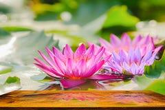 Diese schöne rosa Seerose- oder Lotosblume, die mit hölzerner Tabelle auf dem Wasser im Garten, Thailand blüht Stockfotografie