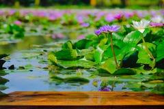 Diese schöne Seerose- oder Lotosblume, die auf dem Wasser und der Holztabelle im Garten, Thailand blüht Lizenzfreie Stockfotografie