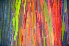 Horizontale Regenbogen-Eukalyptus-Baumrinde Stockfotos