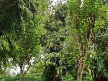 Dieses Bild des indischen botanischen Gartens lizenzfreies stockbild