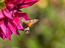 Schmetterling Lizenzfreie Stockfotografie