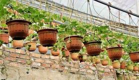 Erdbeerbauernhof Lizenzfreie Stockfotos