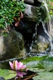 Wasserlilienhintergrund Stockfotos