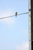Vogel auf einem Draht Stockfoto