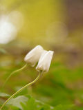 Dieses ist eine Abbildung der schönen Blumen auf einem hellen Hintergrund Stockfoto