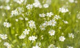 Dieses ist eine Abbildung der schönen Blumen auf einem hellen Hintergrund Stockfotos