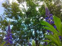 Dieses ist eine Abbildung der schönen Blumen auf einem hellen Hintergrund Lizenzfreies Stockbild