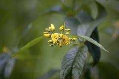 Dieses ist eine Abbildung der schönen Blumen auf einem hellen Hintergrund Stockfotografie