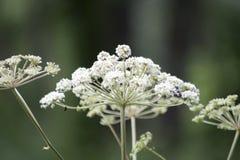 Dieses ist eine Abbildung der schönen Blumen auf einem hellen Hintergrund Stockbild