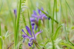 Dieses ist eine Abbildung der schönen Blumen auf einem hellen Hintergrund Holz der Blumen im Frühjahr Stockbild
