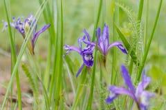 Dieses ist eine Abbildung der schönen Blumen auf einem hellen Hintergrund Holz der Blumen im Frühjahr Lizenzfreies Stockfoto