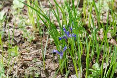 Dieses ist eine Abbildung der schönen Blumen auf einem hellen Hintergrund Holz der Blumen im Frühjahr Lizenzfreie Stockbilder