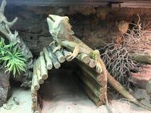 Dieses ist eine Art Gecko im mittleren Vietnam stockbild