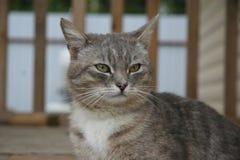 Dieses ist eine cat lizenzfreie stockfotos
