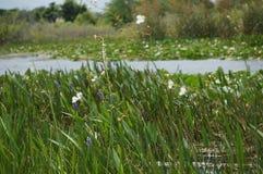Dieses ist eine Sumpflandschaft stockbilder