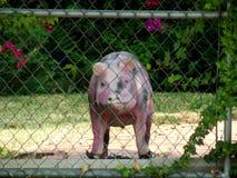 Dieses kleine Piggy ging zu vermarkten Lizenzfreie Stockbilder