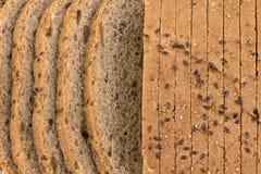 Diet-bröd för helt vete i skivor Royaltyfri Bild