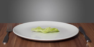 Diet craze. A leaf of lettuce on white plate royalty free stock photos