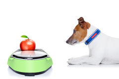 Diet dog Royalty Free Stock Images