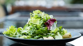Diet food meal weight loss salad healthy fit. Diet food meal. Fresh herb salad for weight loss. Low calorie dish for healthy and fit body royalty free stock images