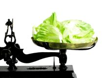 Diet lettuce. Lettuce leaves on a tray scale as a suggestion that vegetables are good for diet royalty free stock image