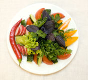 Diet salad on a plate Royalty Free Stock Photo