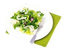 Diet weight loss breakfast concept. Mix of fresh green organic salad leaves. Studio Photon Royalty Free Stock Photos