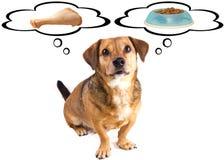 Dieta del piccolo cane Fotografie Stock