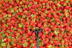 Dieta dell'ortaggio da frutto della disintossicazione di estate della primavera Chiuda su del mucchio del raccolto Supporto del s Fotografia Stock Libera da Diritti