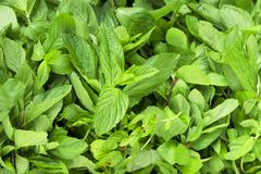 Dieta di erbe della frutta della disintossicazione di estate della primavera Chiuda su del mucchio del raccolto Supporto del supe Fotografia Stock Libera da Diritti