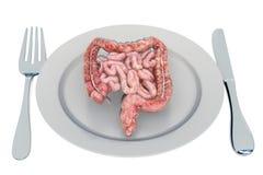 Dieta para un concepto del sistema digestivo sano y del aparato gastrointestinal, representación 3D stock de ilustración