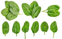 dieta zdrowa Szpinak greenfield Dla kulinarnego jedzenia dieta jest twój odosobniony obrazy stock