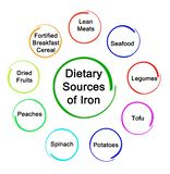 Dietary Sources of Iron. Important Dietary Sources of Iron Royalty Free Stock Photos