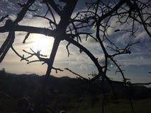 Dietro gli alberi Fotografia Stock Libera da Diritti