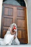 Dietro un mazzo delle rose Fotografia Stock