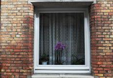 Dietro una finestra Fotografia Stock Libera da Diritti