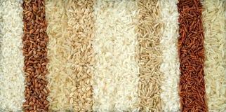 Diez diversas variedades de arroz foto de archivo