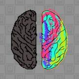 Diferenças entre os hemisférios do cérebro Fotografia de Stock Royalty Free