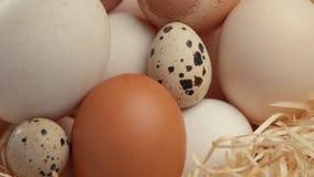 Diferente tipo de huevos metrajes
