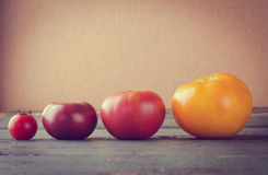 Diferentes tipos coloridos de tomates en fondo de madera Fotos de archivo