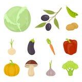 Diferentes tipos de iconos de la historieta de las verduras en la colección del sistema para el diseño Acción del símbolo del vec Imagenes de archivo