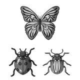 Diferentes tipos de iconos monocromáticos de los insectos en la colección del sistema para el diseño Web de la acción del símbolo Imágenes de archivo libres de regalías