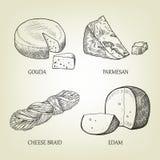 Diferentes tipos de queso realista Colección gráfica del vector Imagenes de archivo