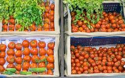 Diferentes tipos de tomates Imagen de archivo libre de regalías